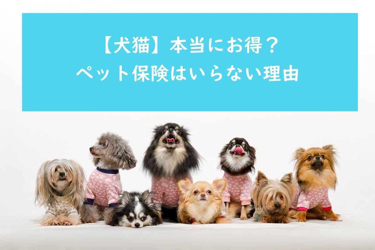 【犬猫】本当にお得?ペット保険はいらない理由