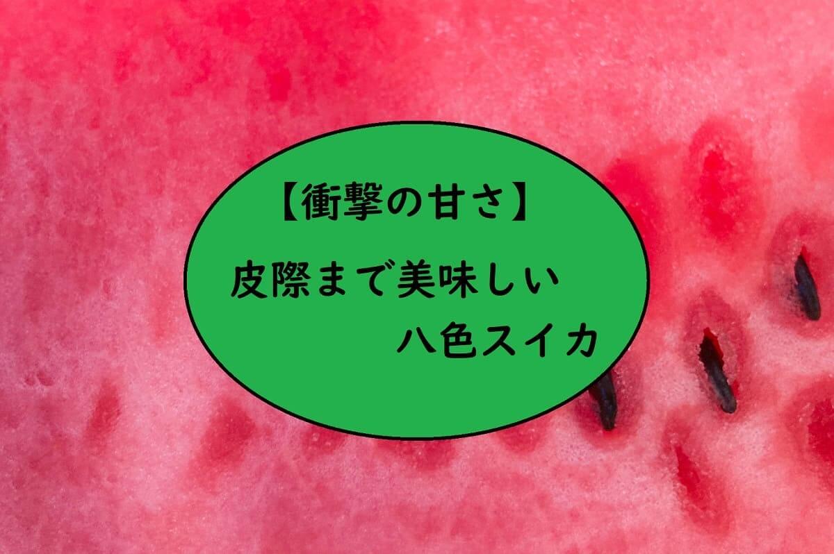 【衝撃の甘さ】皮際まで美味しい八色スイカ